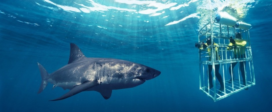 Swim with Sharks Crazy Bucket List Ideas
