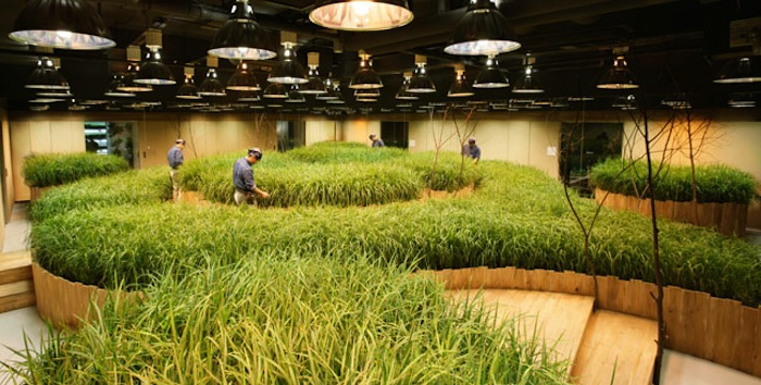 pasona underground farm tokyo
