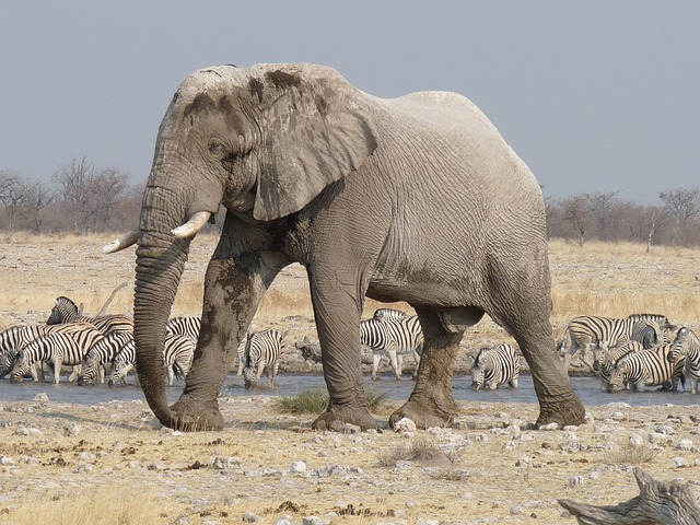 best places to travel in june etosha