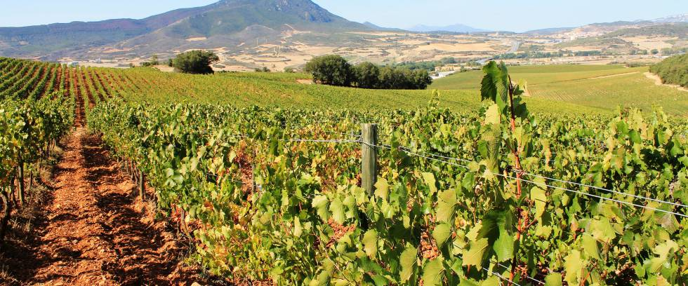 navarra wine chivite