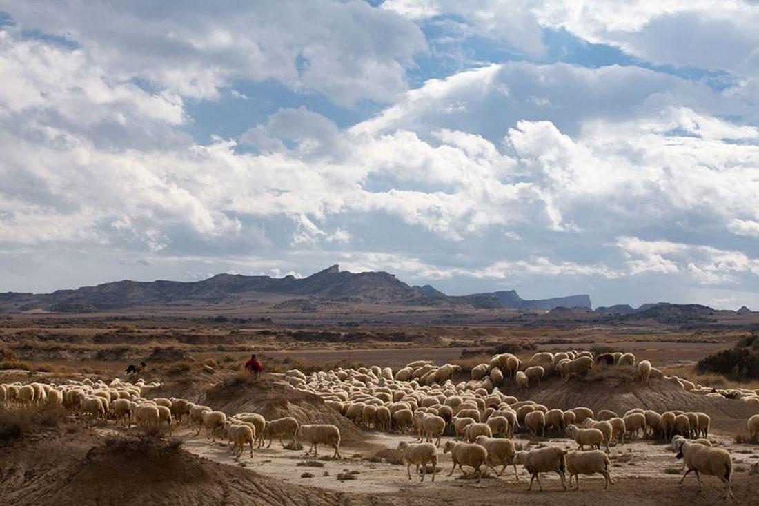 navarra foods lamb