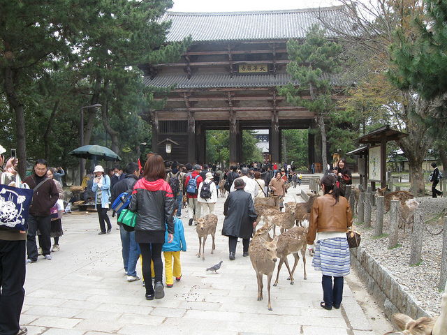 best places to travel in january nara japan