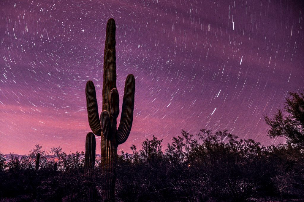 saguaro national park best places to travel in may