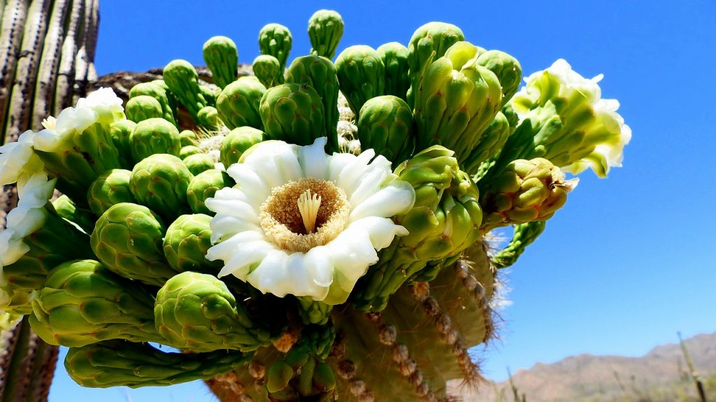 deserts in bloom best places to travel in may